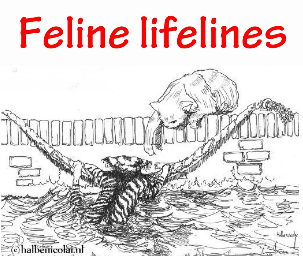to the English page explaining the succesful project Feline lifelines